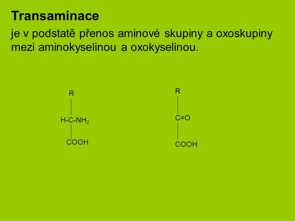 Transaminace je v podstatě přenos aminové skupiny a oxoskupiny mezi aminokyselinou a oxokyselinou.