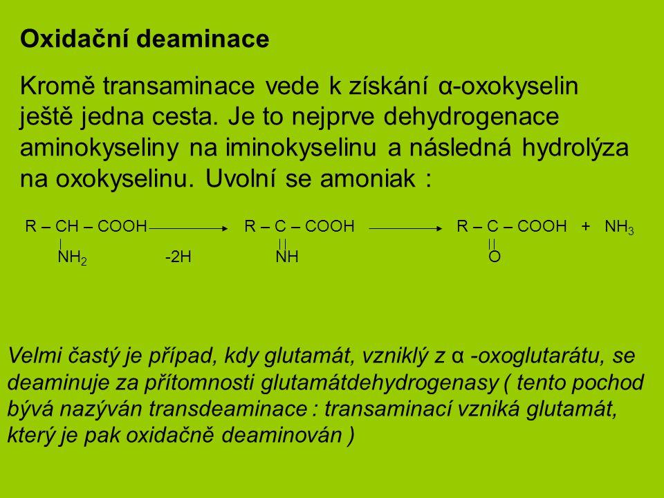 Oxidační deaminace Kromě transaminace vede k získání α-oxokyselin ještě jedna cesta.