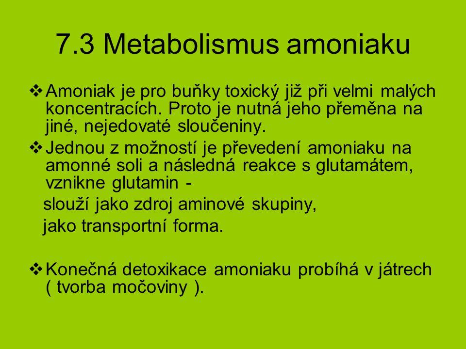 7.3 Metabolismus amoniaku  Amoniak je pro buňky toxický již při velmi malých koncentracích.