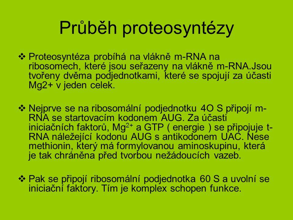 Průběh proteosyntézy  Proteosyntéza probíhá na vlákně m-RNA na ribosomech, které jsou seřazeny na vlákně m-RNA.Jsou tvořeny dvěma podjednotkami, které se spojují za účasti Mg2+ v jeden celek.