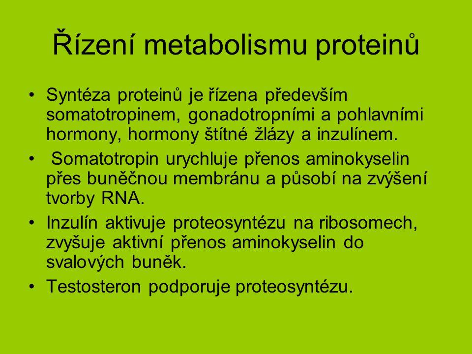 Řízení metabolismu proteinů Syntéza proteinů je řízena především somatotropinem, gonadotropními a pohlavními hormony, hormony štítné žlázy a inzulínem.