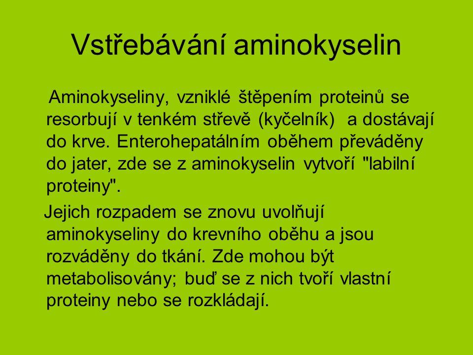 7.2 Metabolismus aminokyselin Aminokyseliny přivedené do tkání a buněk mohou být využity několika způsoby : 1.