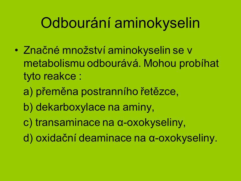 Odbourání aminokyselin Značné množství aminokyselin se v metabolismu odbourává.
