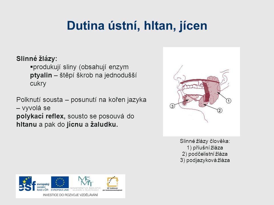 Dutina ústní, hltan, jícen Slinné žlázy:  produkují sliny (obsahují enzym ptyalin – štěpí škrob na jednodušší cukry Polknutí sousta – posunutí na koř