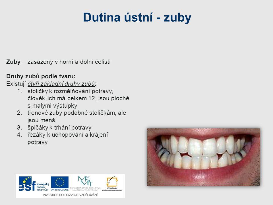 Dutina ústní - zuby Zuby – zasazeny v horní a dolní čelisti Druhy zubů podle tvaru: Existují čtyři základní druhy zubů: 1.stoličky k rozmělňování potr