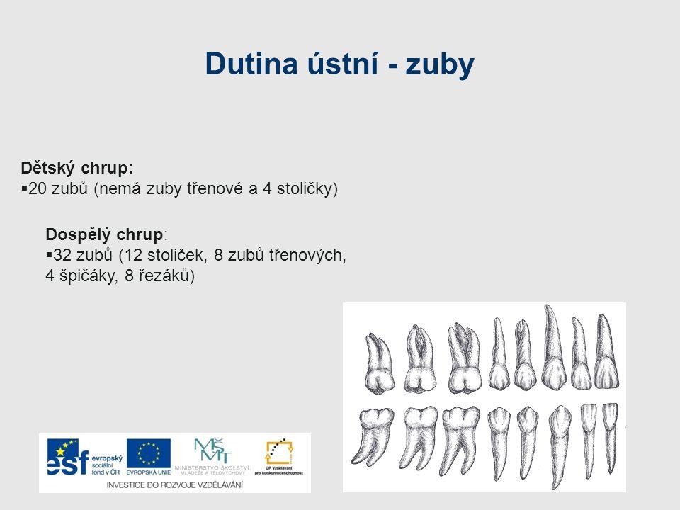 Dutina ústní - zuby Dětský chrup:  20 zubů (nemá zuby třenové a 4 stoličky) Dospělý chrup:  32 zubů (12 stoliček, 8 zubů třenových, 4 špičáky, 8 řez