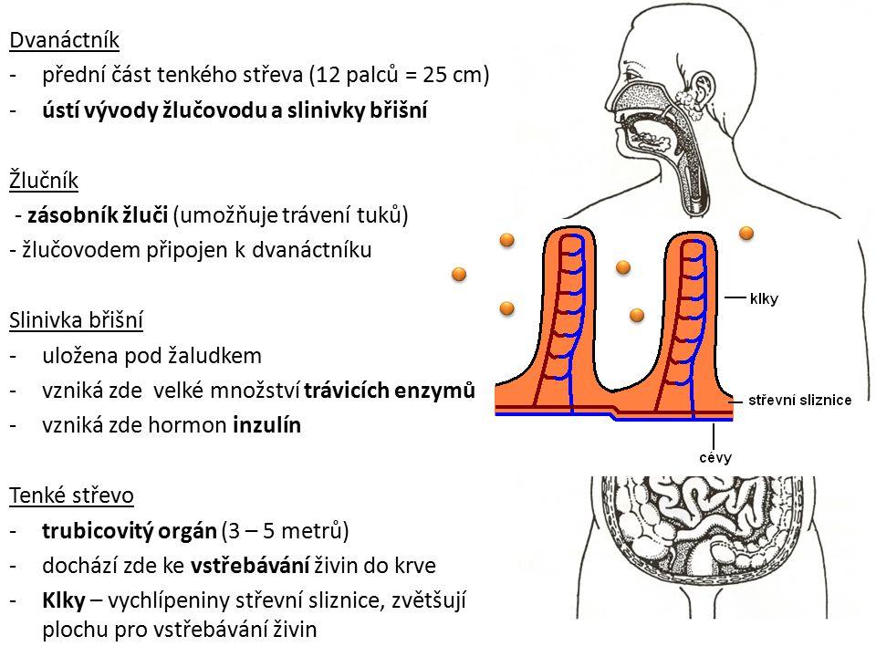 Dvanáctník -přední část tenkého střeva (12 palců = 25 cm) -ústí vývody žlučovodu a slinivky břišní Žlučník - zásobník žluči (umožňuje trávení tuků) -