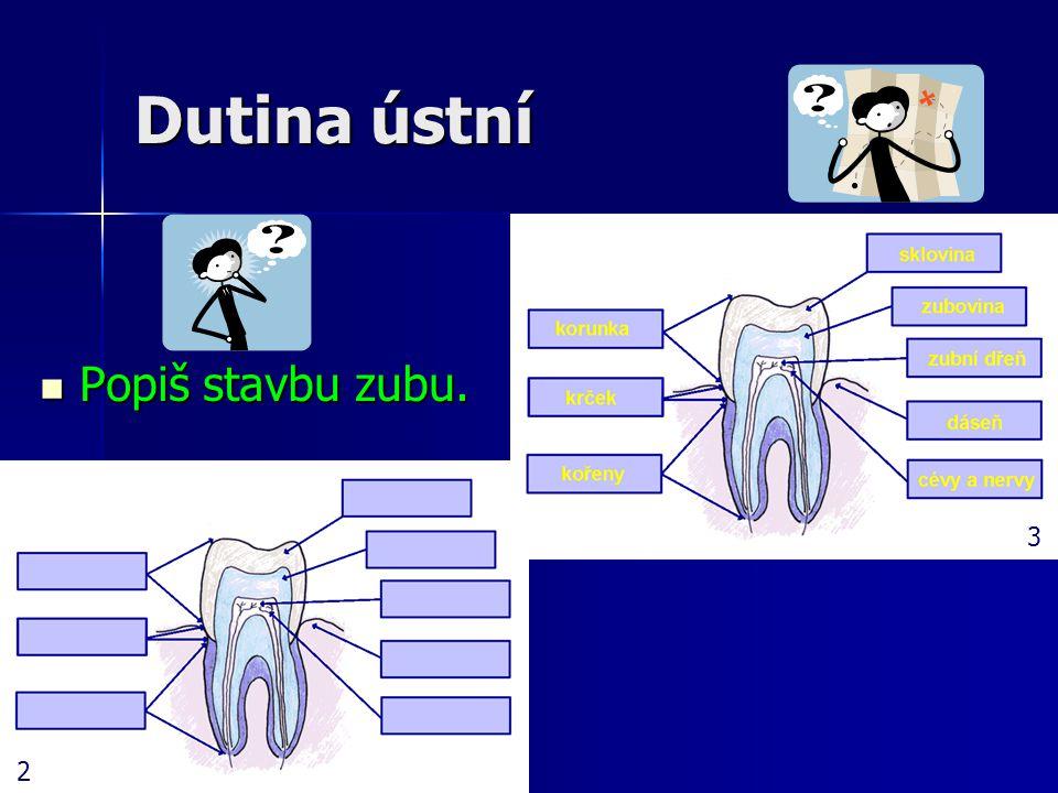 Dutina ústní Popiš stavbu zubu. Popiš stavbu zubu. 2 3