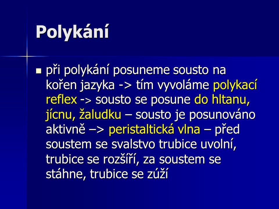 Polykání při polykání posuneme sousto na kořen jazyka -> tím vyvoláme polykací reflex - ˃ sousto se posune do hltanu, jícnu, žaludku – sousto je posun