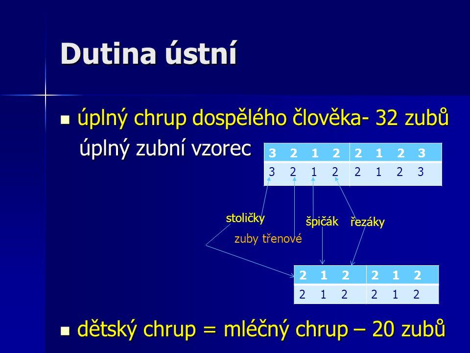 Dutina ústní úplný chrup dospělého člověka- 32 zubů úplný chrup dospělého člověka- 32 zubů úplný zubní vzorec úplný zubní vzorec dětský chrup = mléčný