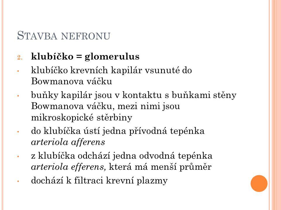 S TAVBA NEFRONU 2.