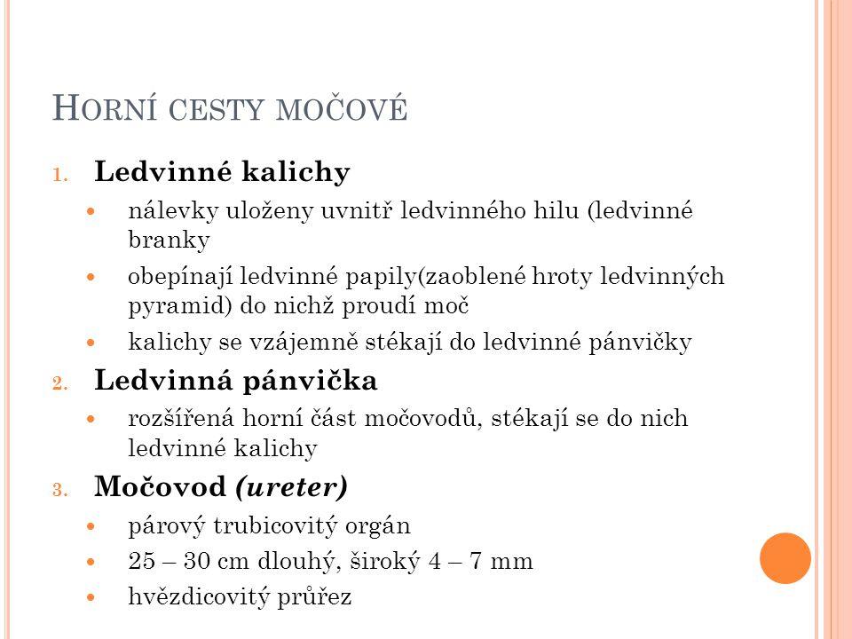 H ORNÍ CESTY MOČOVÉ 1.