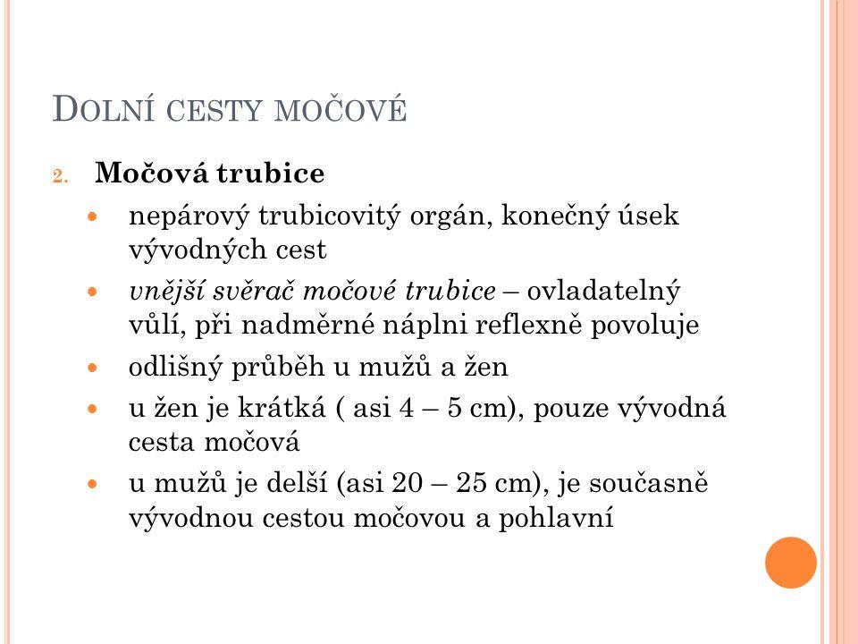 D OLNÍ CESTY MOČOVÉ 2.