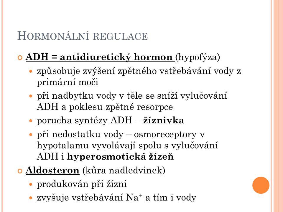 H ORMONÁLNÍ REGULACE ADH = antidiuretický hormon (hypofýza) způsobuje zvýšení zpětného vstřebávání vody z primární moči při nadbytku vody v těle se sníží vylučování ADH a poklesu zpětné resorpce porucha syntézy ADH – žíznivka při nedostatku vody – osmoreceptory v hypotalamu vyvolávají spolu s vylučování ADH i hyperosmotická žízeň Aldosteron (kůra nadledvinek) produkován při žízni zvyšuje vstřebávání Na + a tím i vody