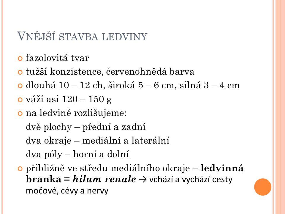 V NĚJŠÍ STAVBA LEDVINY fazolovitá tvar tužší konzistence, červenohnědá barva dlouhá 10 – 12 ch, široká 5 – 6 cm, silná 3 – 4 cm váží asi 120 – 150 g na ledvině rozlišujeme: dvě plochy – přední a zadní dva okraje – mediální a laterální dva póly – horní a dolní přibližně ve středu mediálního okraje – ledvinná branka = hilum renale → vchází a vychází cesty močové, cévy a nervy