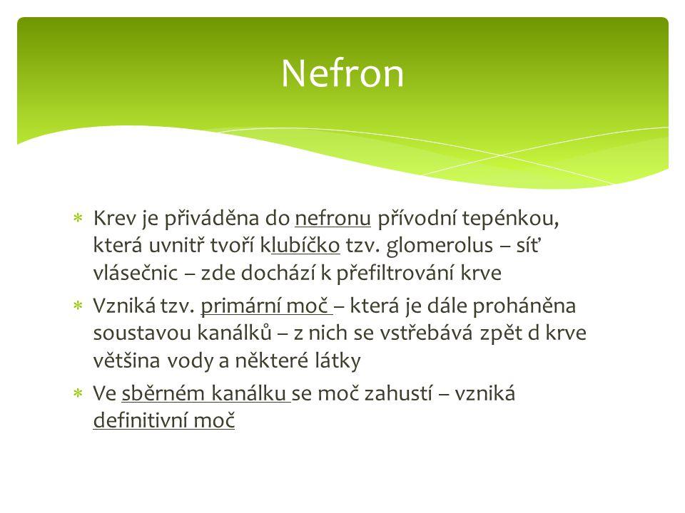  Krev je přiváděna do nefronu přívodní tepénkou, která uvnitř tvoří klubíčko tzv.