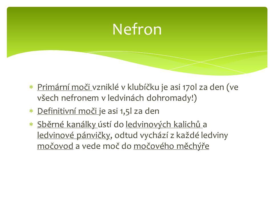  Primární moči vzniklé v klubíčku je asi 170l za den (ve všech nefronem v ledvinách dohromady!)  Definitivní moči je asi 1,5l za den  Sběrné kanálky ústí do ledvinových kalichů a ledvinové pánvičky, odtud vychází z každé ledviny močovod a vede moč do močového měchýře Nefron