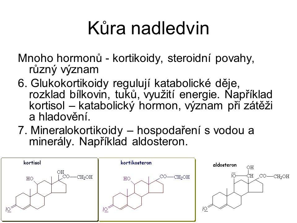 Kůra nadledvin Mnoho hormonů - kortikoidy, steroidní povahy, různý význam 6. Glukokortikoidy regulují katabolické děje, rozklad bílkovin, tuků, využit