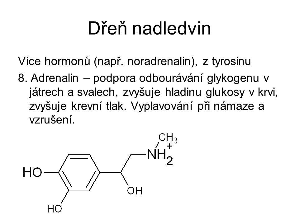 Dřeň nadledvin Více hormonů (např. noradrenalin), z tyrosinu 8. Adrenalin – podpora odbourávání glykogenu v játrech a svalech, zvyšuje hladinu glukosy