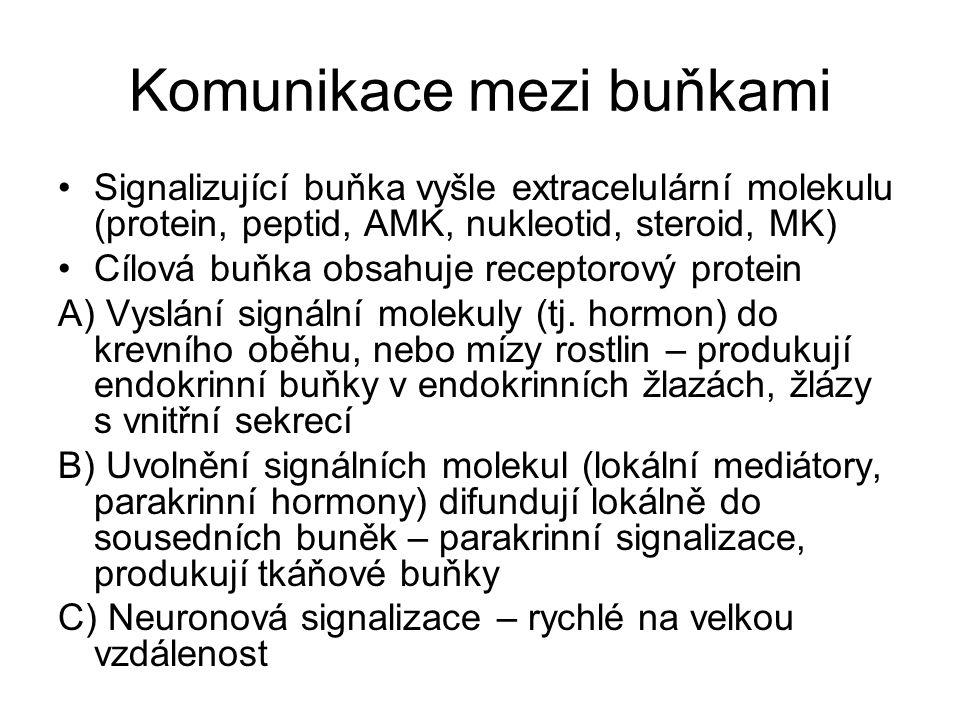 Komunikace mezi buňkami Signalizující buňka vyšle extracelulární molekulu (protein, peptid, AMK, nukleotid, steroid, MK) Cílová buňka obsahuje recepto