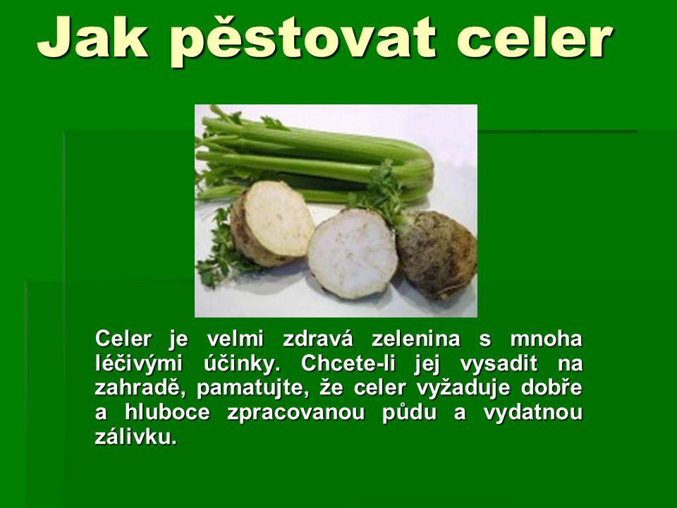 Jak pěstovat celer Celer je velmi zdravá zelenina s mnoha léčivými účinky. Chcete-li jej vysadit na zahradě, pamatujte, že celer vyžaduje dobře a hlub