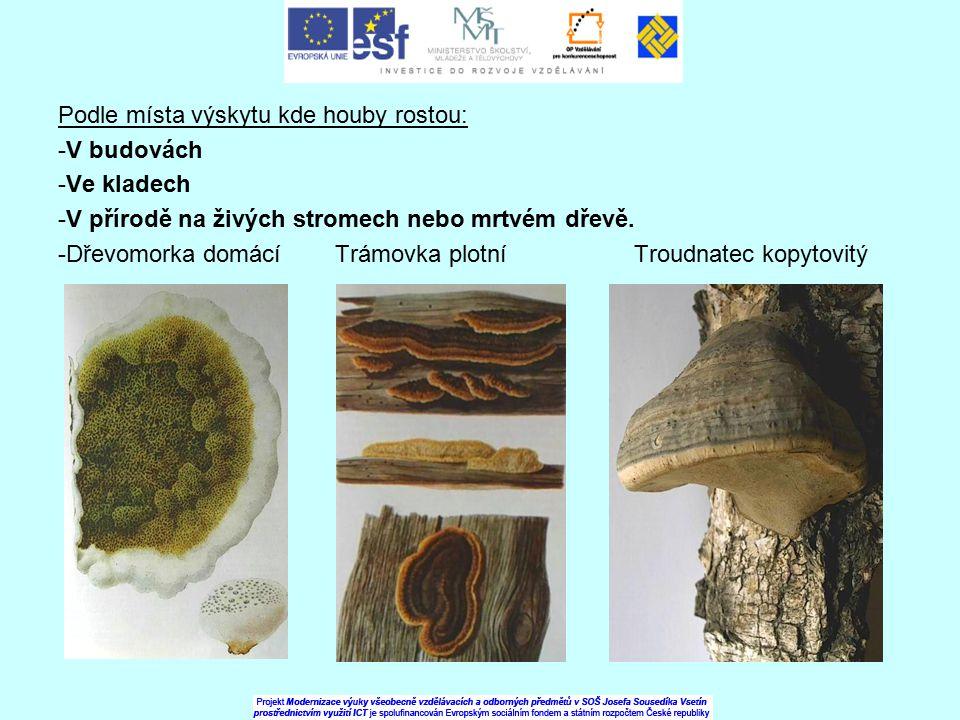 Podle místa výskytu kde houby rostou: -V budovách -Ve kladech -V přírodě na živých stromech nebo mrtvém dřevě. -Dřevomorka domácí Trámovka plotní Trou