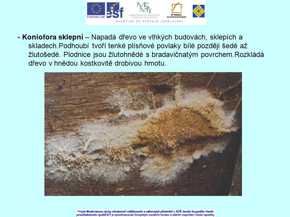 - Koniofora sklepní – Napadá dřevo ve vlhkých budovách, sklepích a skladech.Podhoubí tvoří tenké plísňové povlaky bílé později šedé až žlutošedé. Plod