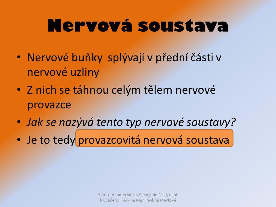 Nervová soustava Nervové buňky splývají v přední části v nervové uzliny Z nich se táhnou celým tělem nervové provazce Jak se nazývá tento typ nervové