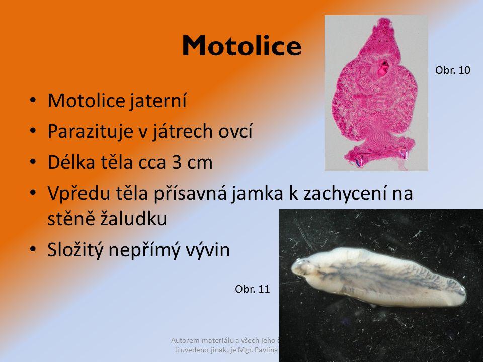 Motolice Motolice jaterní Parazituje v játrech ovcí Délka těla cca 3 cm Vpředu těla přísavná jamka k zachycení na stěně žaludku Složitý nepřímý vývin Autorem materiálu a všech jeho částí, není- li uvedeno jinak, je Mgr.