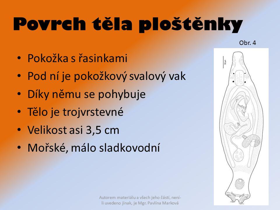 Povrch těla ploštěnky Pokožka s řasinkami Pod ní je pokožkový svalový vak Díky němu se pohybuje Tělo je trojvrstevné Velikost asi 3,5 cm Mořské, málo