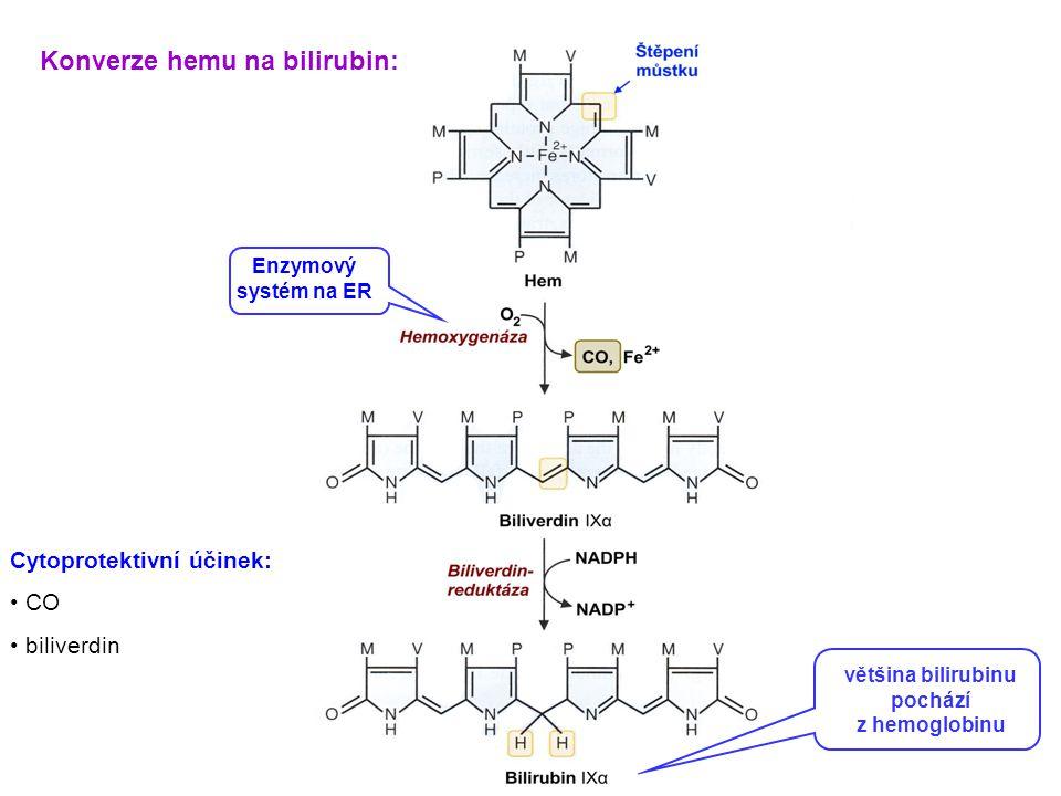 Konverze hemu na bilirubin: většina bilirubinu pochází z hemoglobinu Enzymový systém na ER Cytoprotektivní účinek: CO biliverdin