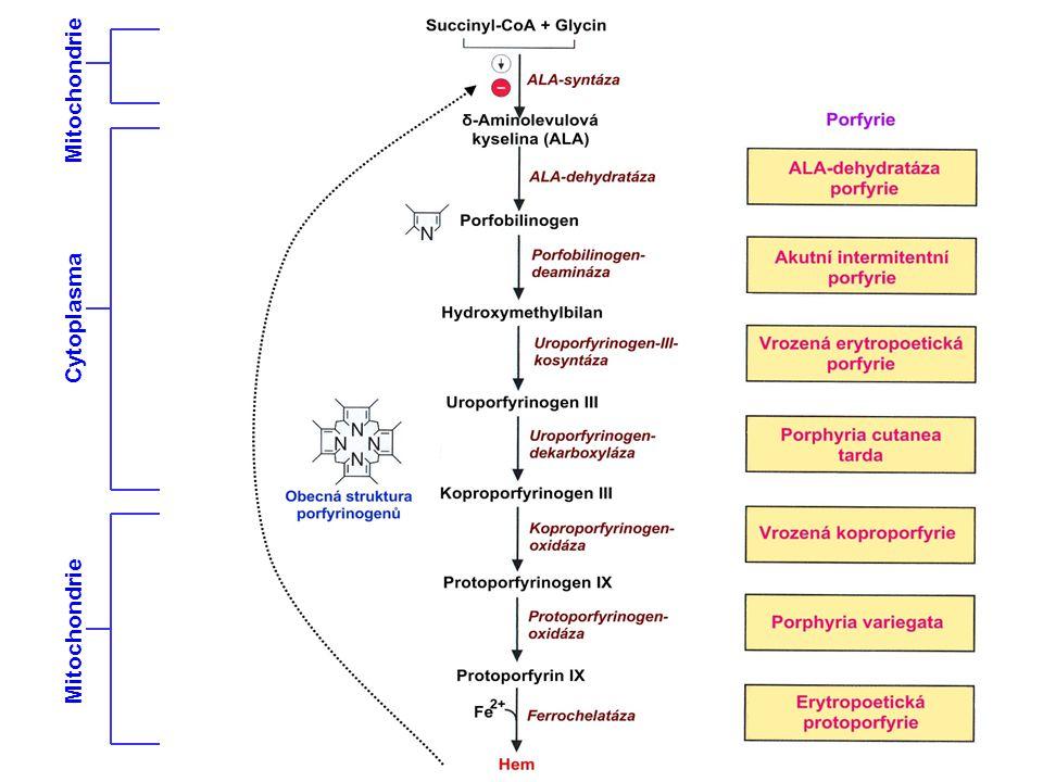 Mitochondrie Cytoplasma