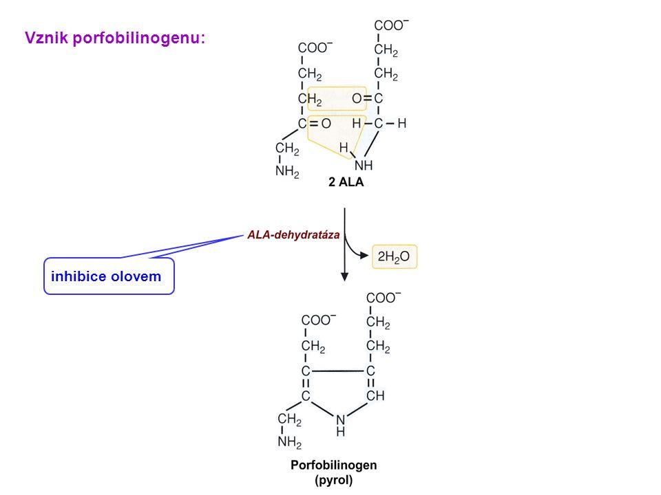 Vznik porfobilinogenu: inhibice olovem