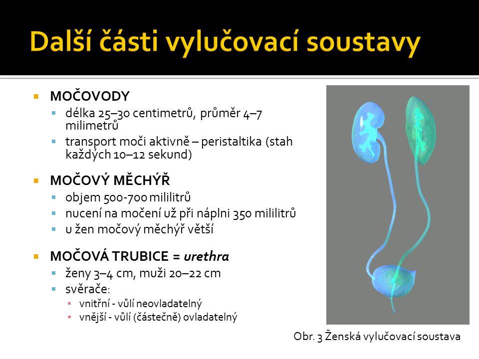  MOČOVODY  délka 25–30 centimetrů, průměr 4–7 milimetrů  transport moči aktivně – peristaltika (stah každých 10–12 sekund)  MOČOVÝ MĚCHÝŘ  objem