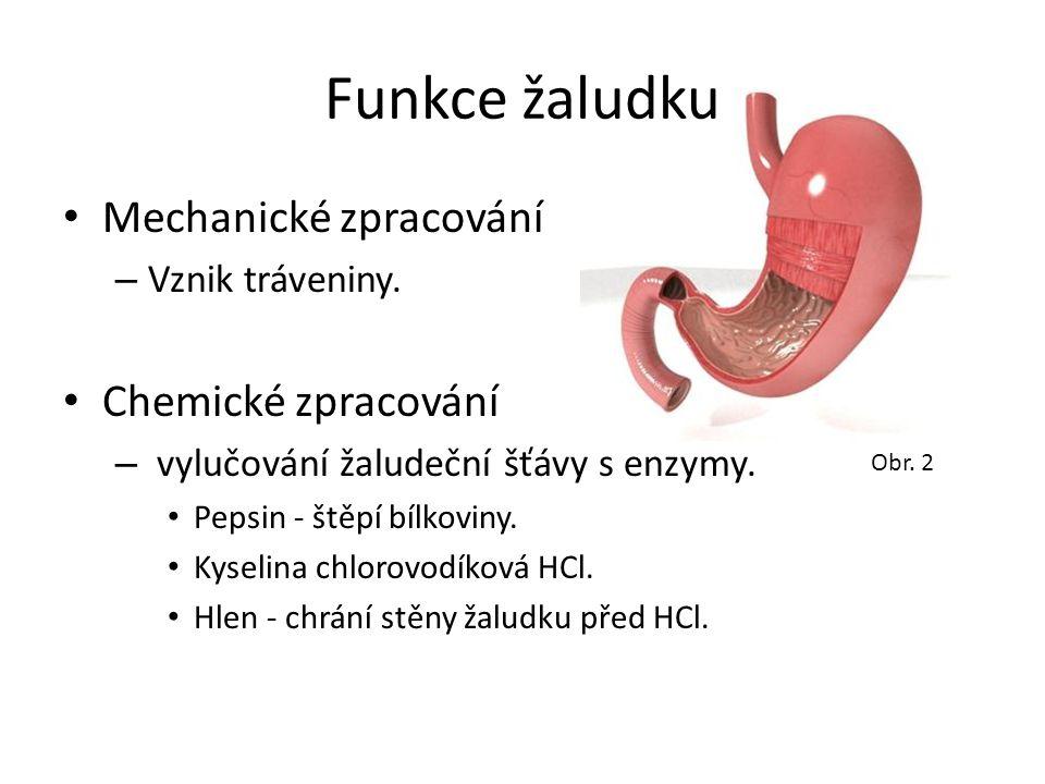Funkce žaludku Mechanické zpracování – Vznik tráveniny. Chemické zpracování – vylučování žaludeční šťávy s enzymy. Pepsin - štěpí bílkoviny. Kyselina