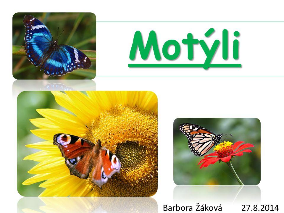 Motýli Velice nápadný hmyz Štíhlé tělíčko jemné chloupky Kyjovitá tykadla