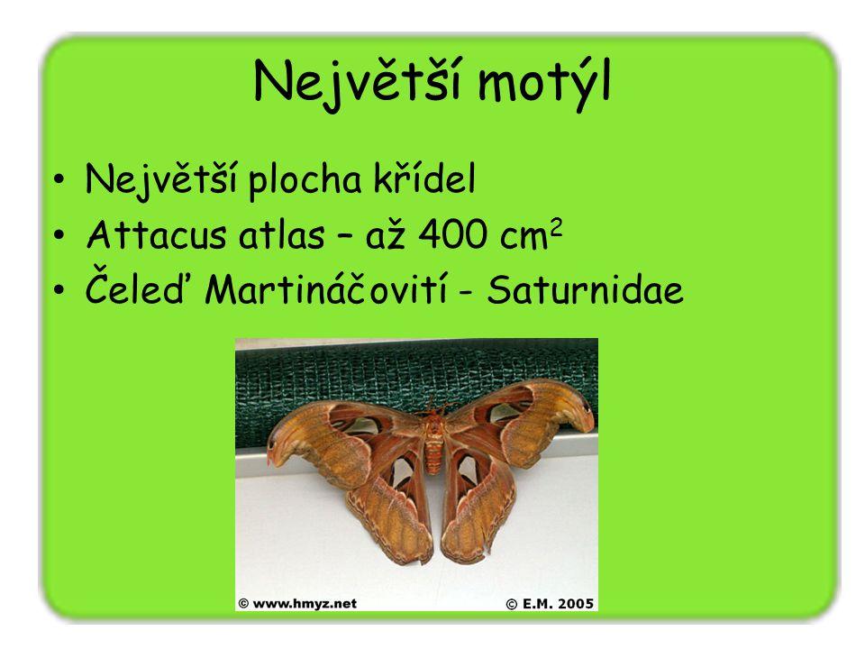 Největší motýl Největší plocha křídel Attacus atlas – až 400 cm 2 Čeleď Martináčovití - Saturnidae