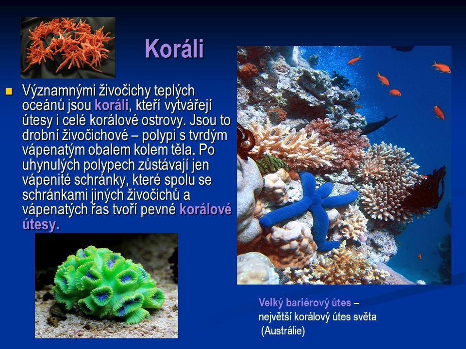 Koráli Významnými živočichy teplých oceánů jsou koráli, kteří vytvářejí útesy i celé korálové ostrovy.