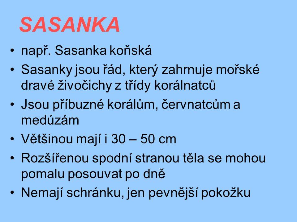 SASANKA např. Sasanka koňská Sasanky jsou řád, který zahrnuje mořské dravé živočichy z třídy korálnatců Jsou příbuzné korálům, červnatcům a medúzám Vě
