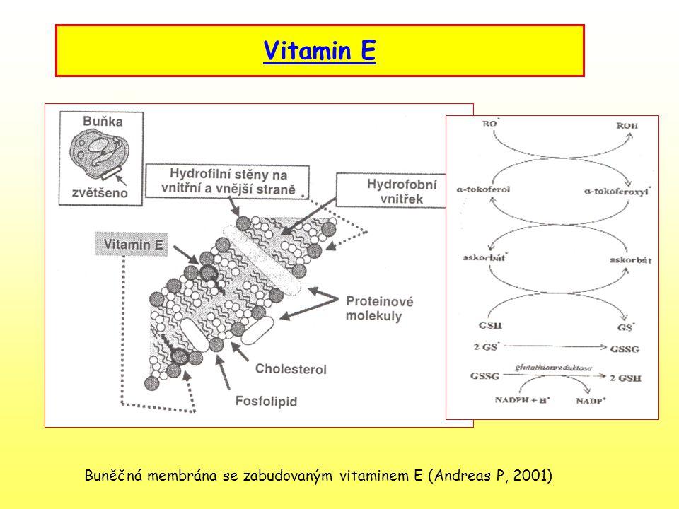 Vitamin C – kyselina askorbová Velmi významný vitamin – funkce není ještě plně vyjasněna Antioxidační působení společně s vitamin E – ochrana organismu proti půsbení volných radikálů - snížení rizika rakoviny, zvýšení imunity, vstřebávání železa Zdroje: rostlinný původ – citrusové ovoce, jablka, černý rybiz, jahody zelenina – zelí, paprika, křen, brambory Hypovitaminóza – kurděje Hypervitaminóza – neexistuje –přebytečné množství se vyloučí močí