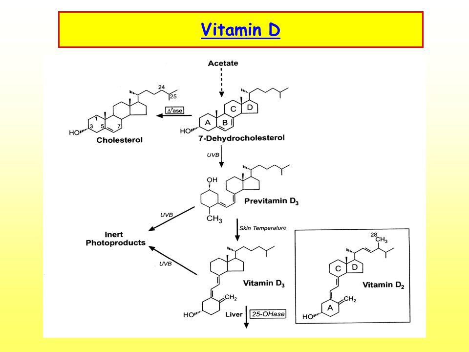 Vitamin B 6 - Pyridoxin Metabolismus bílkovin, sacharidů, PUFA, fosfolipidů Imunitní odpověď Funkce steroidních hormomů Tvorba kolagenu Zdroje: 40 % maso a masné výrobky - ryby, drůbež, vepřové maso, kvasnice 22 % zelenina – brambory, banány Doporučená denní dávka 1,8 –1,9 mg