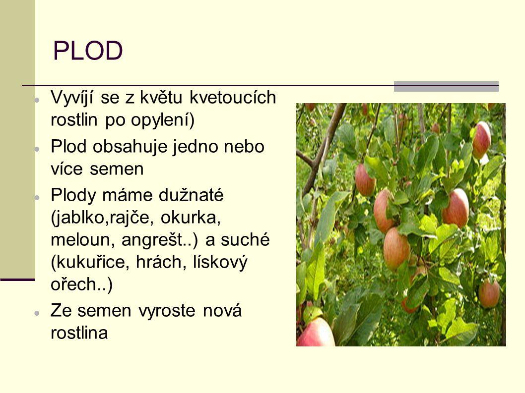 PLOD Vyvíjí se z květu kvetoucích rostlin po opylení) Plod obsahuje jedno nebo více semen Plody máme dužnaté (jablko,rajče, okurka, meloun, angrešt..)