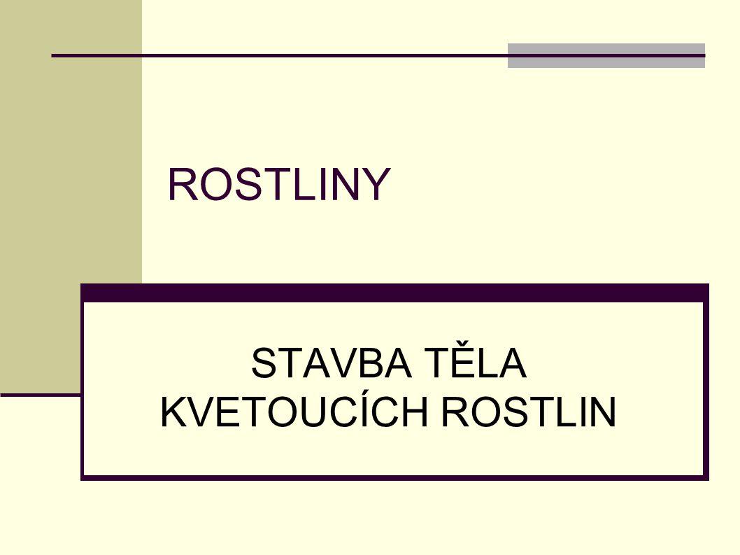 ROSTLINY STAVBA TĚLA KVETOUCÍCH ROSTLIN