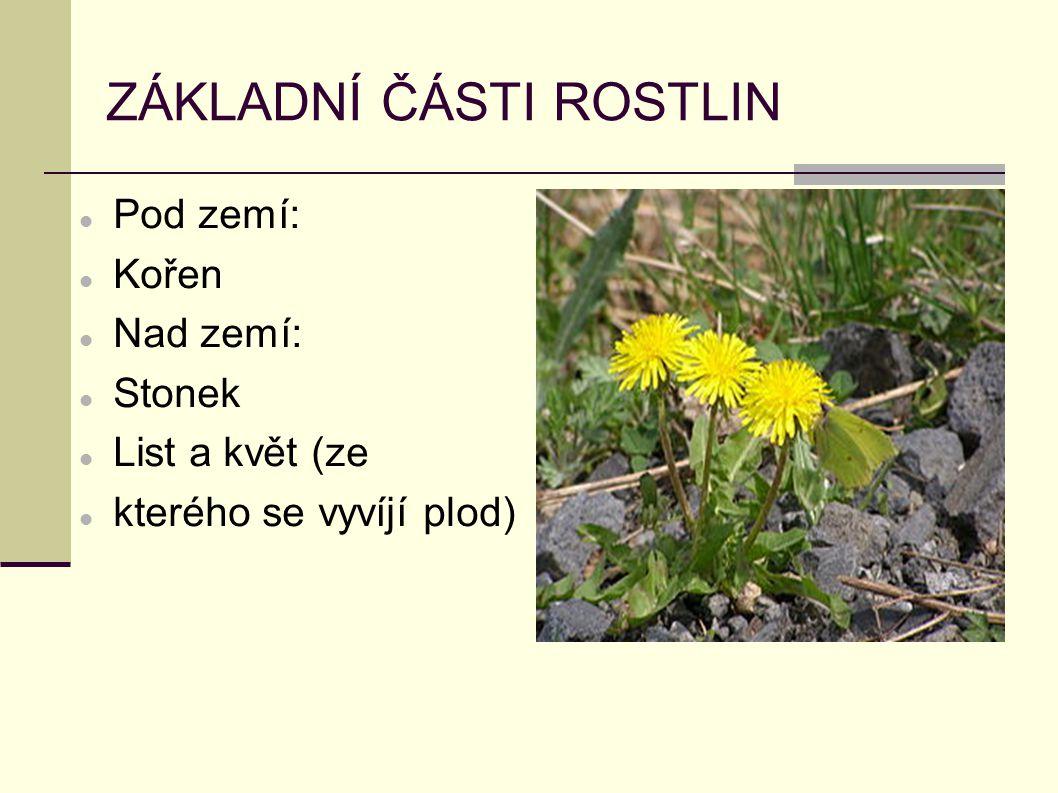 ZÁKLADNÍ ČÁSTI ROSTLIN Pod zemí: Kořen Nad zemí: Stonek List a květ (ze kterého se vyvíjí plod)