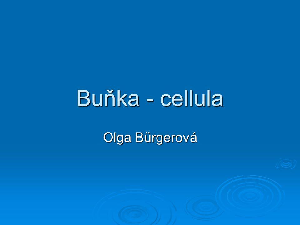 Buňka - cellula Olga Bürgerová