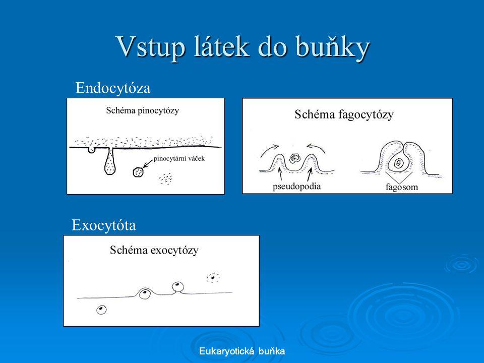 Vstup látek do buňky Eukaryotická buňka Endocytóza Exocytóta