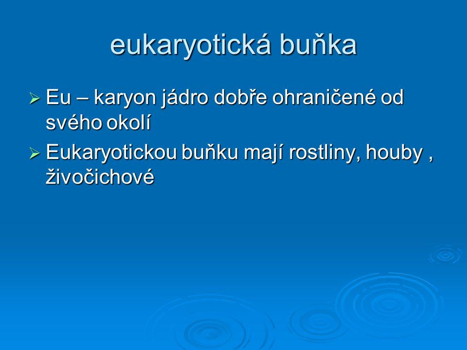 eukaryotická buňka  Eu – karyon jádro dobře ohraničené od svého okolí  Eukaryotickou buňku mají rostliny, houby, živočichové