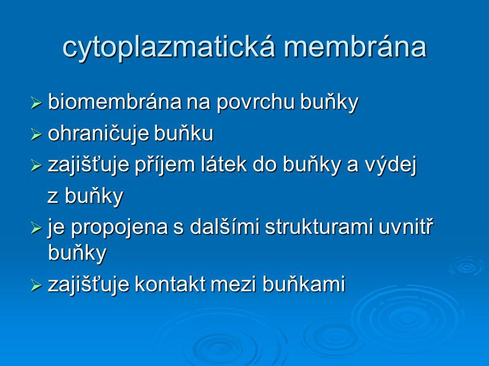 Stavba  Z molekul lipidů, bílkovin,(sacharidů)  Exocytóza – splyne s membránou, vyloučen ven  Endocytóza, pinocytóza –vchlípeníplazmatické membrány, odškrcení, vznikne měchýřek, který je v buňce rozpuštěn a obsah se dostane do cytoplazmy  Fagocytóza – výběžky buňky pohltí částečku