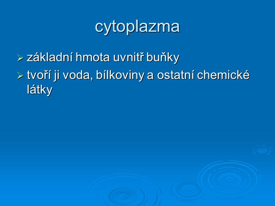 Jádro, nucleus, karyon  zřetelně ohraničeno od okolní cytoplazmy; na povrchu je dvojitá jaderná membrána – blána jaderná, v ní jsou póry – komunikace mezi jádrem a zbytkem buňky; vnitřek je vyplněn polotekutou hmotou, karyoplazmou, ta je tvořena chromatinem (nejcharakterističtější složka jaderné hmoty: DNA, jadérkem (nucleolus),pomocné bílkoviny  řídící centrum buňky