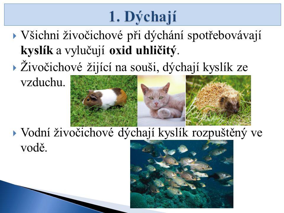  Všichni živočichové při dýchání spotřebovávají kyslík a vylučují oxid uhličitý.  Živočichové žijící na souši, dýchají kyslík ze vzduchu.  Vodní ži
